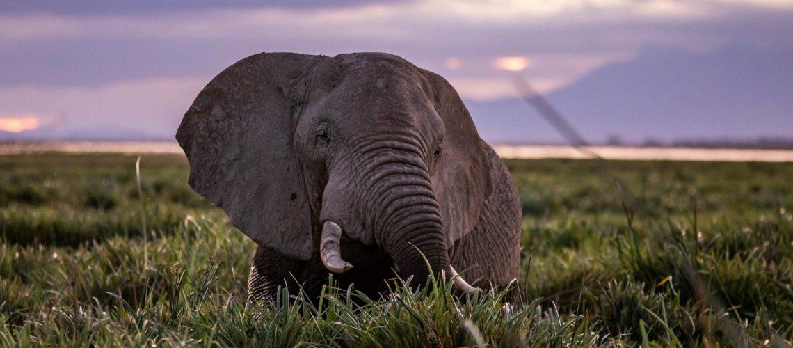 elephantbannerCOMPRESS