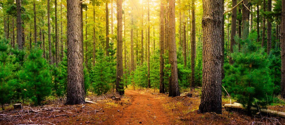 forest-walk-COMPRESS